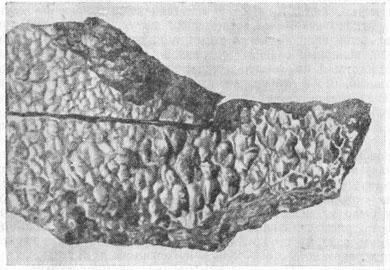 Железный метеорит, упавший на Дальнем Востоке (в Богуславке)